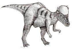 ja.wikipedia.org 250px-Sketch_pachycephalosaurus2.jpg