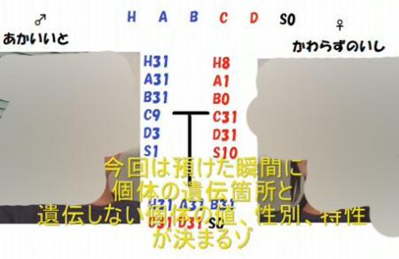 遺伝固定010 のコピー.jpg