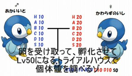 遺伝固定004.png