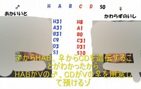 遺伝固定007 のコピー.jpg